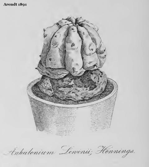 Arendt-1891-Anhalonium-Lewinii