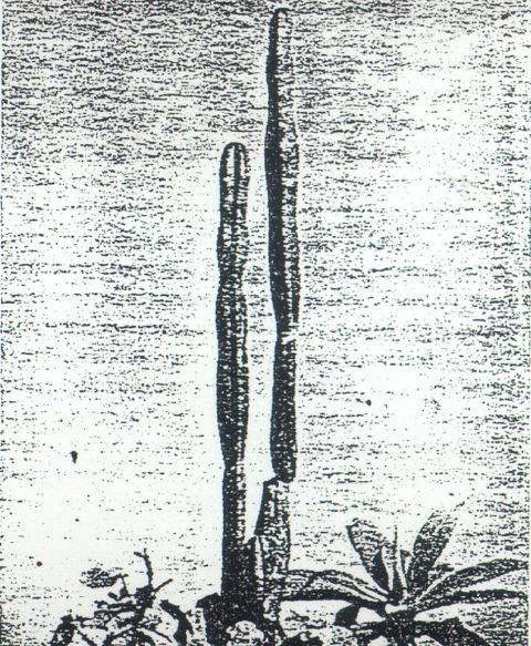 Trichocereus-pachanoi-CruzSanchez-1948