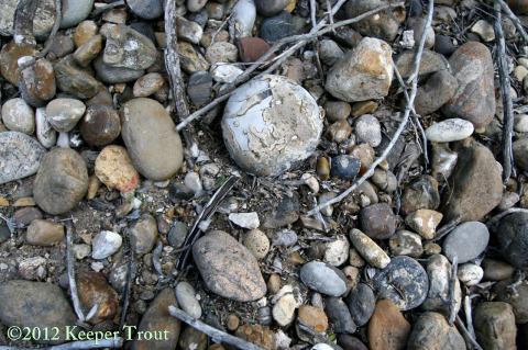 soil-JimHoggCounty-2