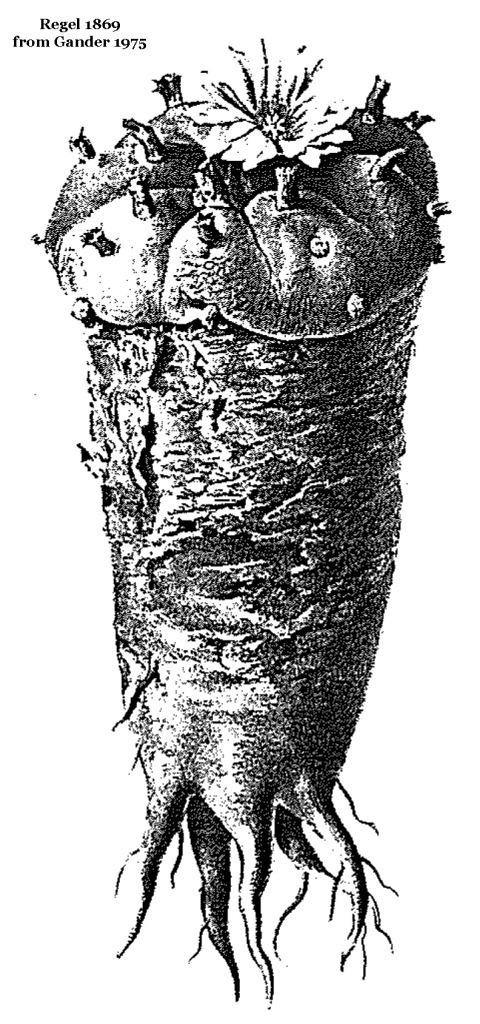 Regel-1869-E-rapa