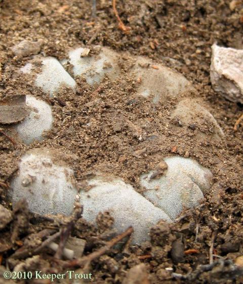 soil-PresidioCounty-6